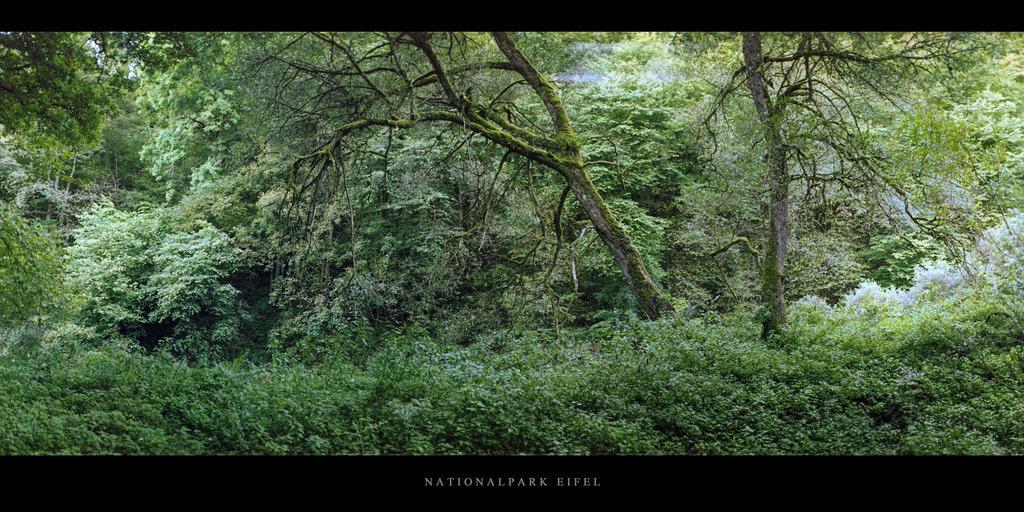 Nationalpark Eifel   Laubwald an der Urft im Nationalpark und Mittelgebirge Eifel