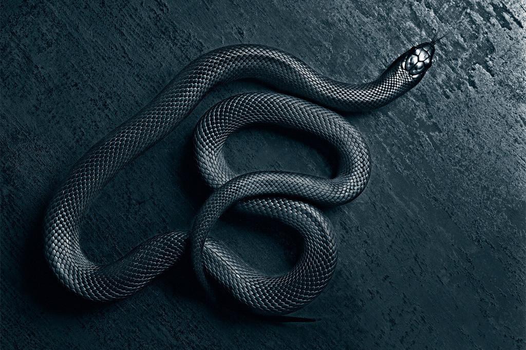 Schwarze Schlange | schwarze Schlange auf schwarzem Untergrund