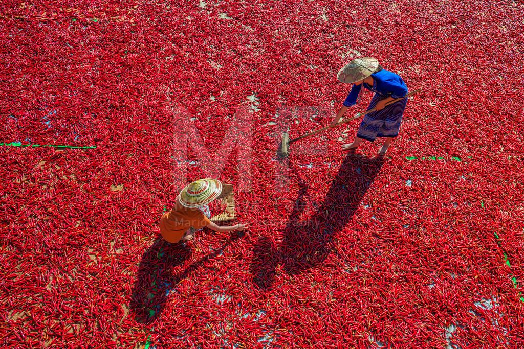 Chiliernte   Frauen sortieren Chilischoten vor ihrem Haus in Kalaw