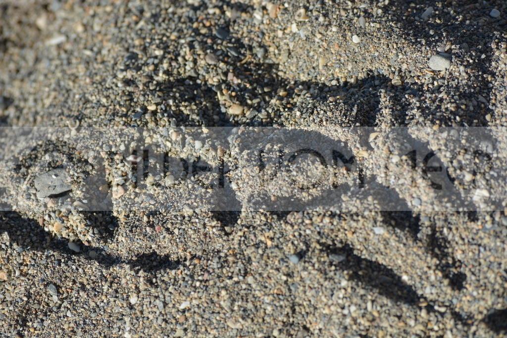 Strand Bilder | Tauben Spuren im Sand von Malaga