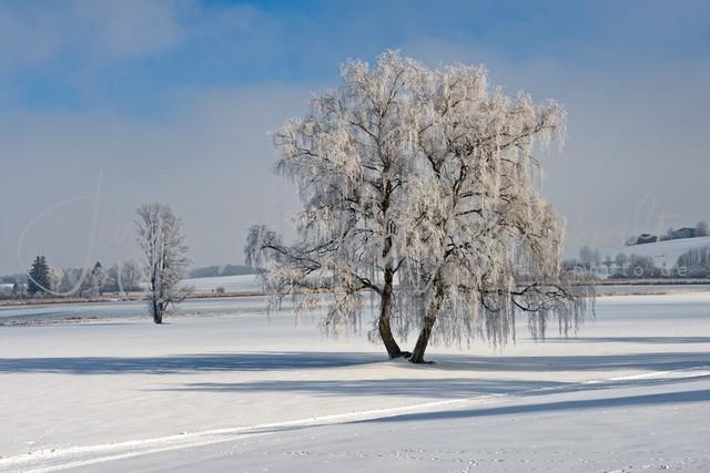 1030766_Baum_Winter_JMW_300