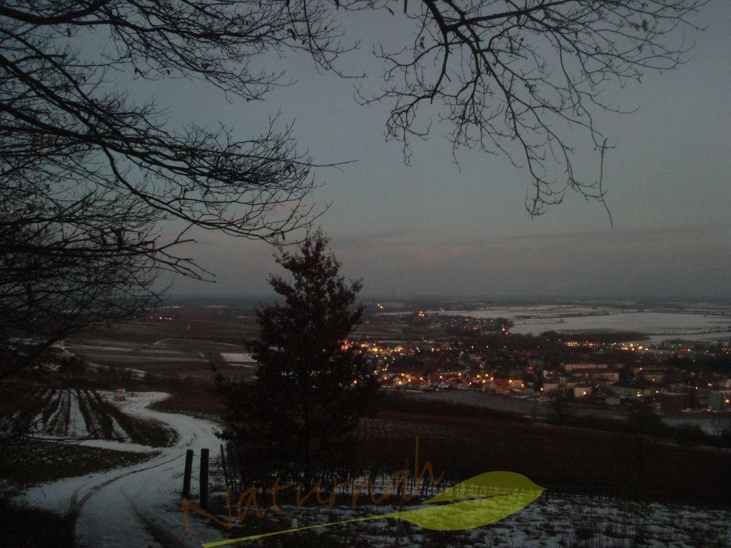 Winterblick auf Bad Bergzabern