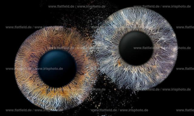 Iris-foto-Beispiel-541