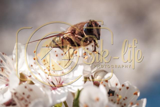 Fleißiges Bienchen 2