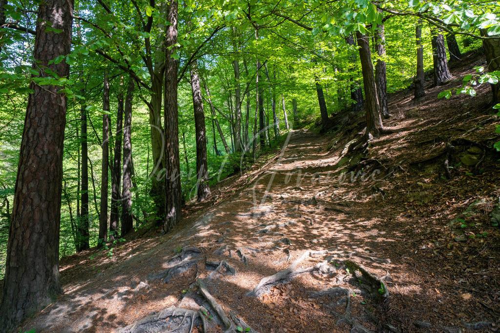 Bergisel | Der Wald am Bergisel