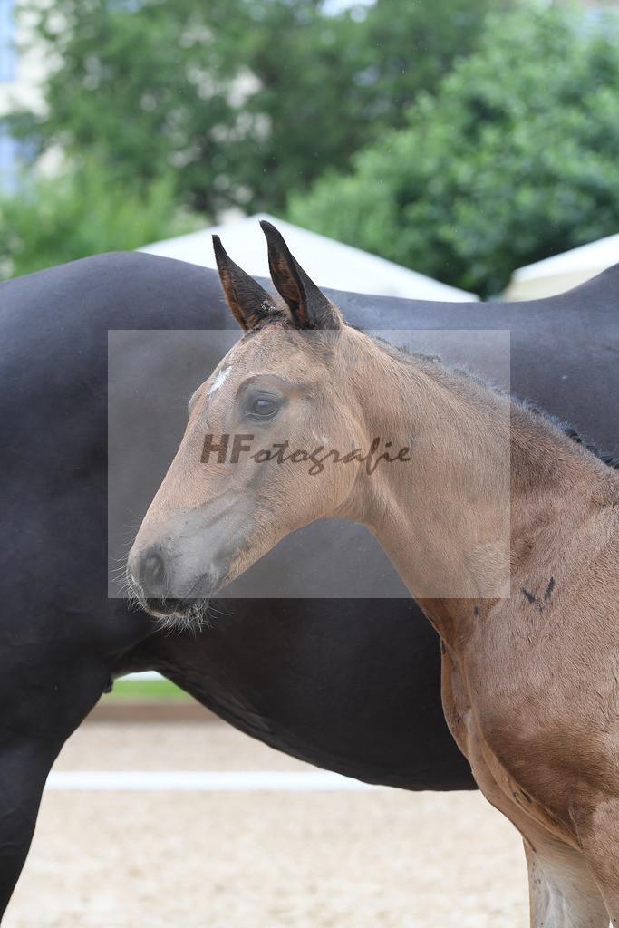 Kat-Nr. 54 HF Quaterback_Fischer_2621041