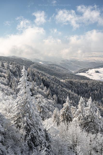 Winterwald   Blick über den tief verschneiten Schwarzwald bei Freiburg im Breisgau.