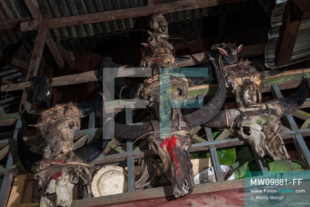 MW09881-FF | Myanmar | Mindat | Reportage: Mindat im Chin State | Bizarre Trophäensammlung mit Schädel von Mithun (Gayal), Büffel und Wildschweinen an einem Haus der Volksgruppe der Chin im Bergdorf Pan Awet. Meist wurden die Wildtiere bei schamanischen Ritualen oder besonderen Feierlichkeiten geopfert. Jagd war ein wichtiger Teil im täglichen Leben der Chin-Männer.   ** Feindaten bitte anfragen bei Mario Weigt Photography, info@asia-stories.com **