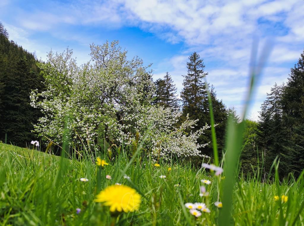 Blühendes im Wald | Baum in voller Blüte im Frühling, mit Blumen im Vordergrund