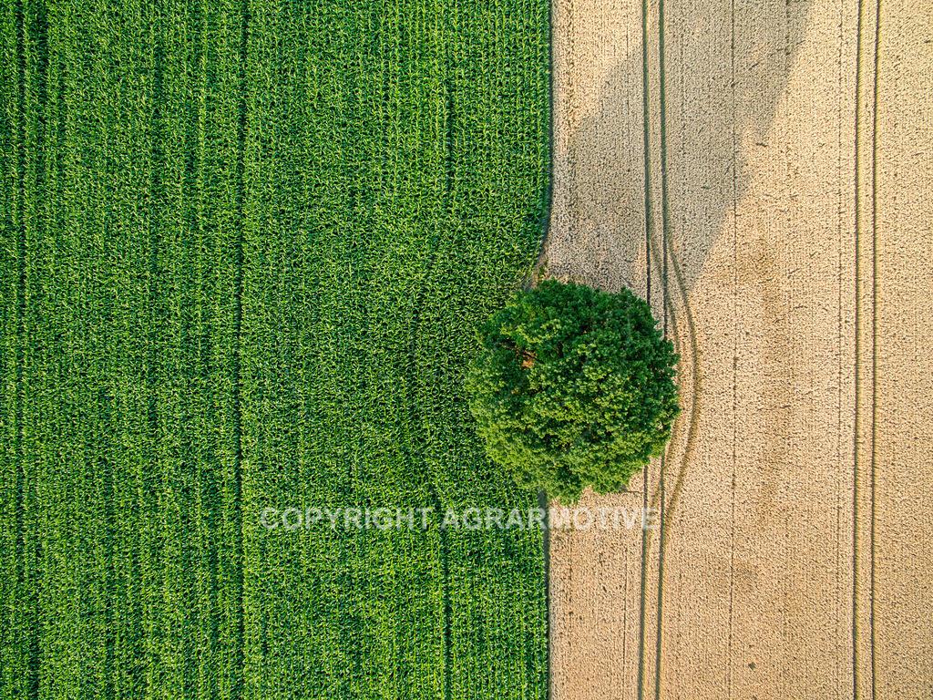 20180704-DJI_0041 | Landschaft mit Baum und Feldern aus der Vogelperspektive