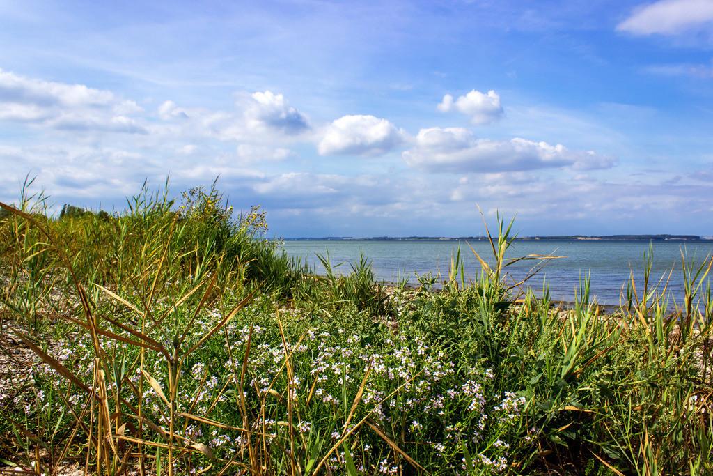 Strand in Habernis   Schilf, Gräser und Blumen am Strand in Habernis