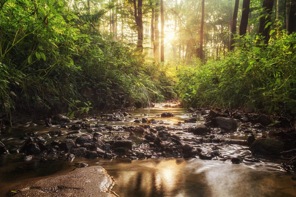 Im Stoteler Wald | Waldbach im Stoteler Wald
