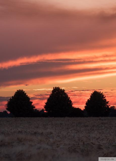 Silhouette im Sonnenuntergang | Silhouette von drei Bäumen im Sonnenuntergang in Raderbroich