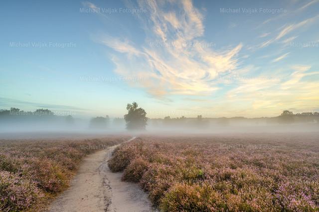 Morgenstimmung in der Westruper Heide | Frühmorgens in der blühenden Westruper Heide, Nebel liegt über der Landschaft und die Schleierwolken werden von der aufgehenden Sonne angeleuchtet.