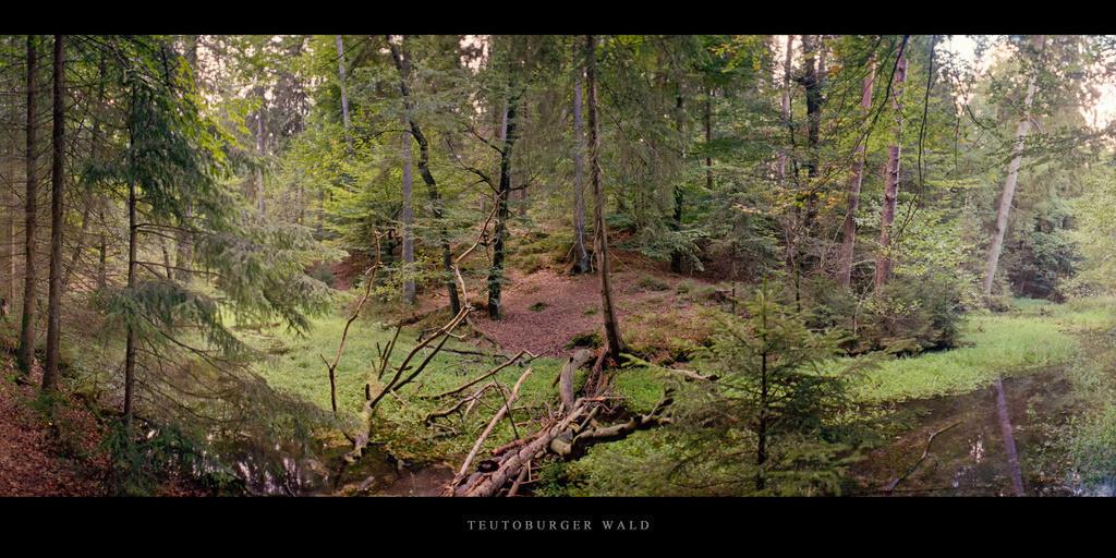 Teutoburger Wald | Lichtung mit Moor im Mischwald Teutoburger Wald