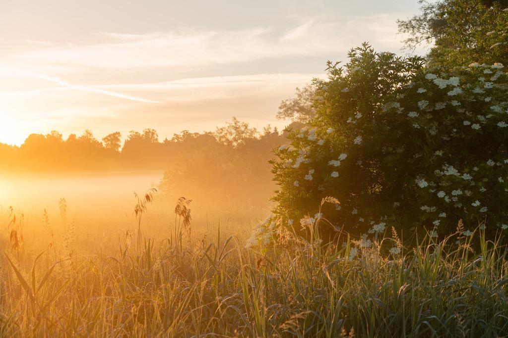 Sunrise Allerpark Sonne durch den Nebel