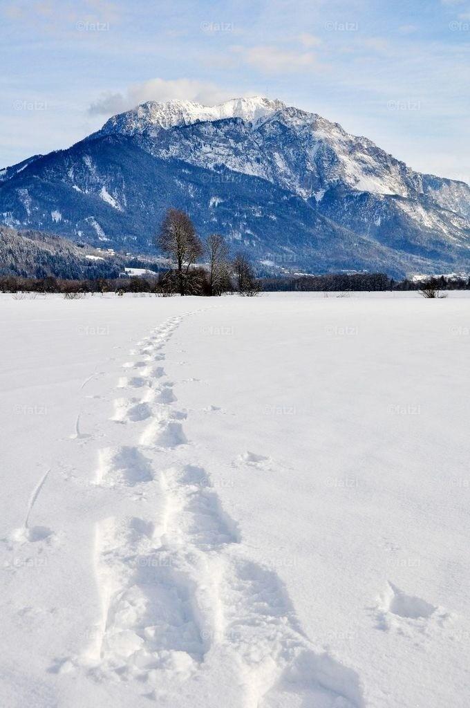dobr-winter-12-2010_017k_1_a