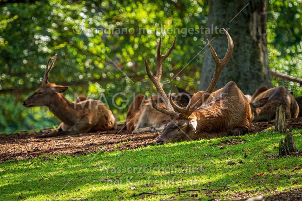 Wildpark-Kaiserslautern_20210918_0974