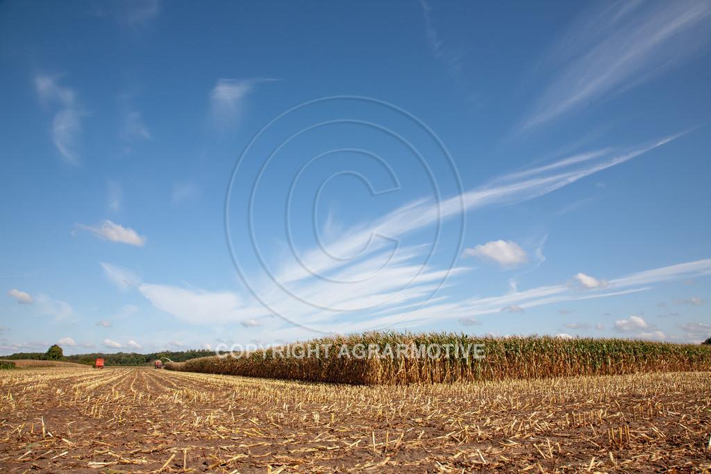 20080914-IMG_8949 | Silomais wird gehäckselt - AGRARFOTO Bilder aus der Landwirtschaft