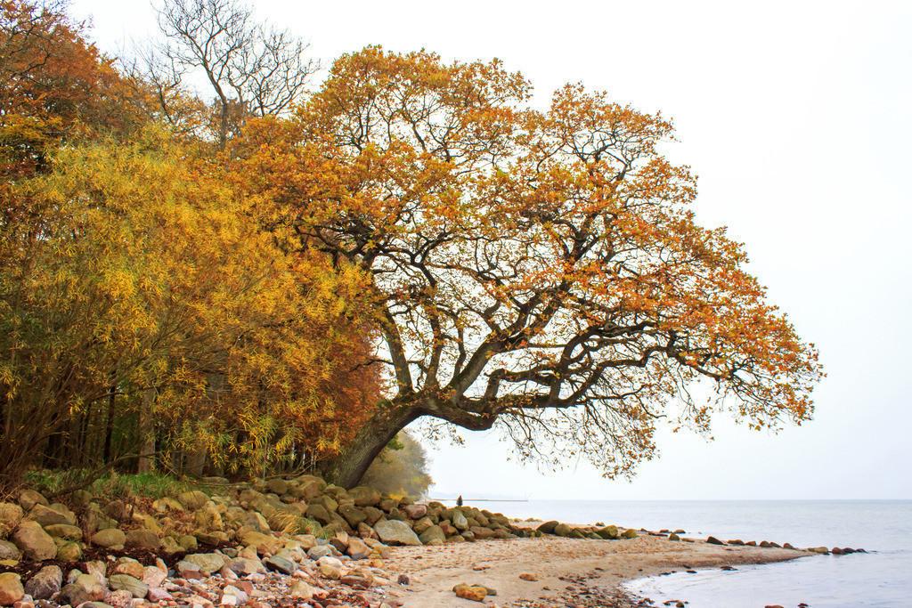 Strand in Ohrfeldhaff | Herbstlicher Baum am Strand in Ohrfeldhaff