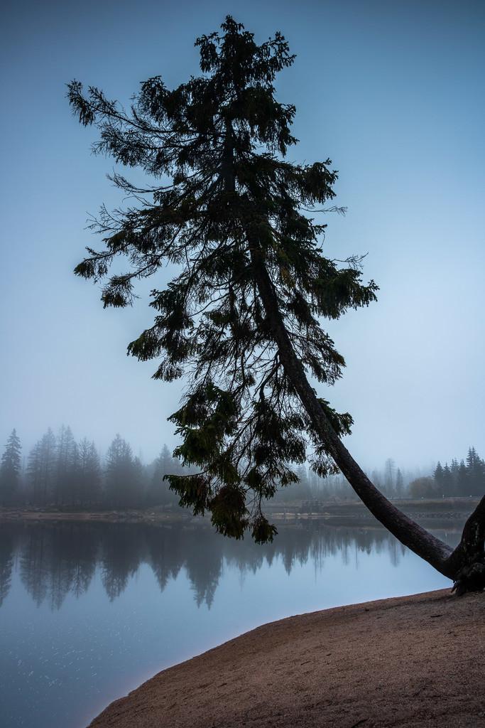 Baum am Oderteich