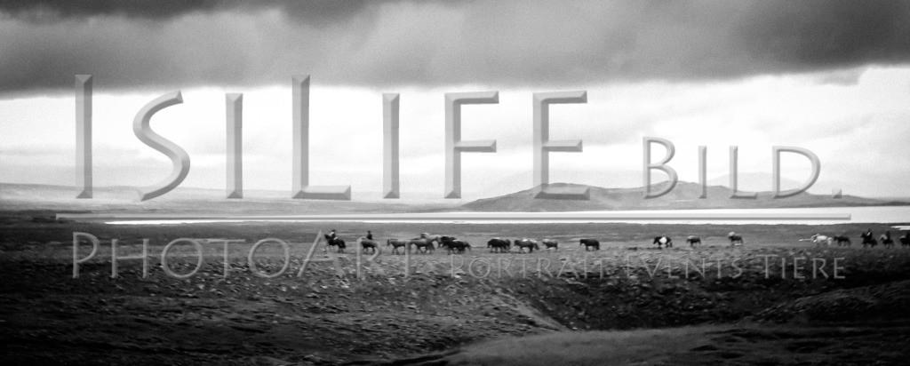 Islandpferde | Reittour auf Island