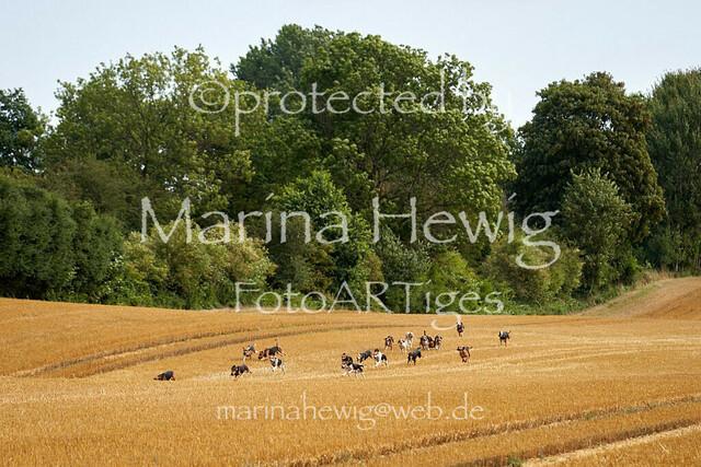Jagd Knoop 217127_Marina Hewig
