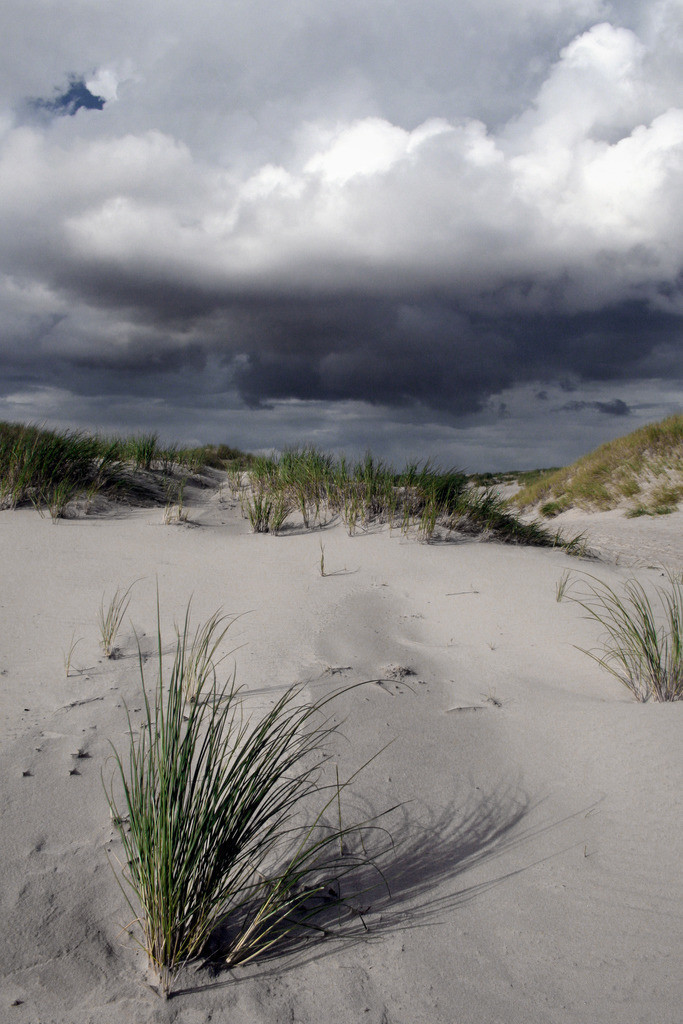 Grass-Unwetter