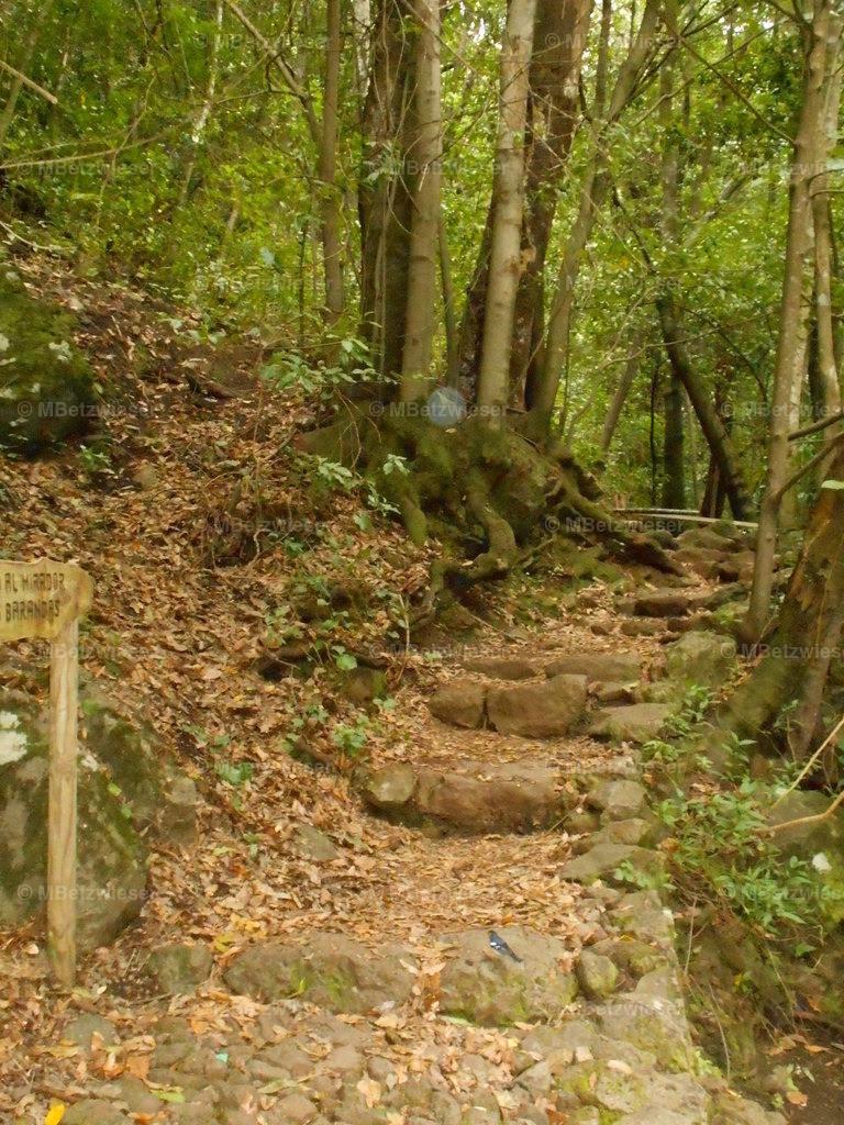 DSCN0945   Wanderweg im Lorbeerwald