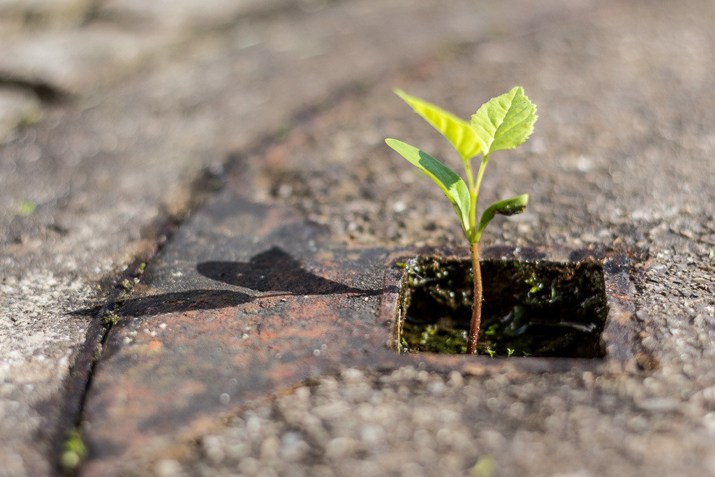 Die Natur ist stärker als Beton