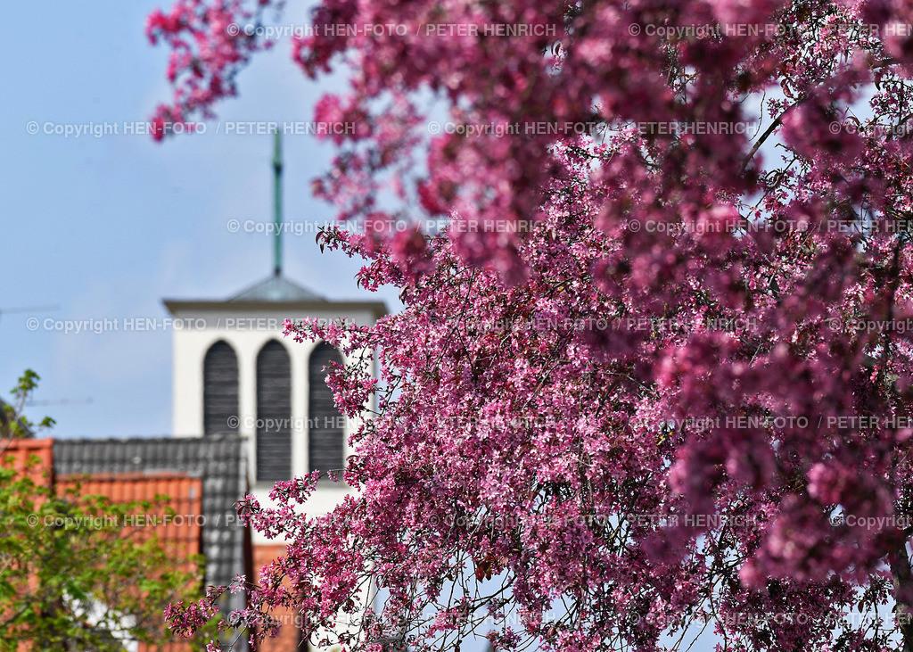 Baumblüte vor der Kirche St. Josef in Darmstadt - copyright by HEN-FOTO | Baumblüte vor der Kirche St. Josef in Darmstadt-Eberstadt - copyright by HEN-FOTO Peter Henrich