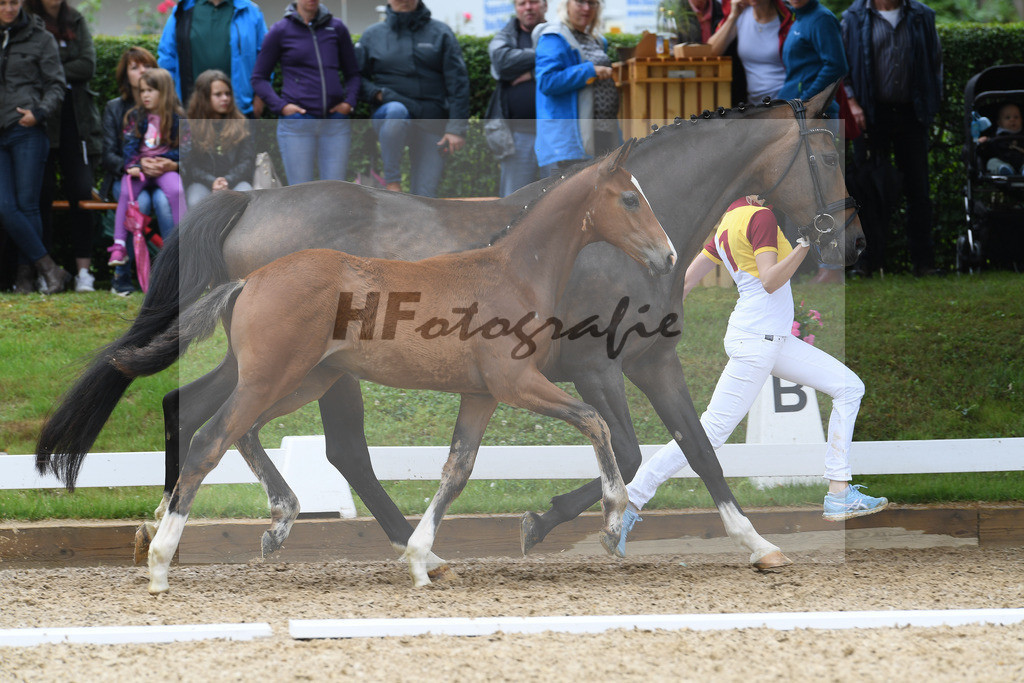 Kat-Nr. 16 HF DSP Va Bene_Ginzinger_2621370