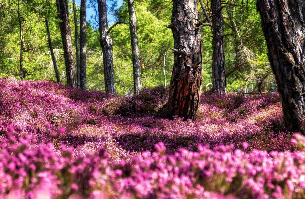 Blütenmeer | Hinterlobming