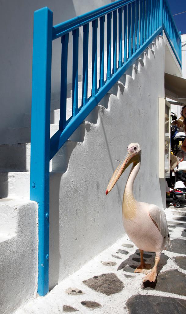 JT-110809-077 | Typischer pinker Pelikan in den Altstadt Gassen von Mykonos Stadt. Weisse Haeuser, blaue Tueren und Fenster, Fugen im Steinboden bemalt. Mykonos, Griechenland, Europa.