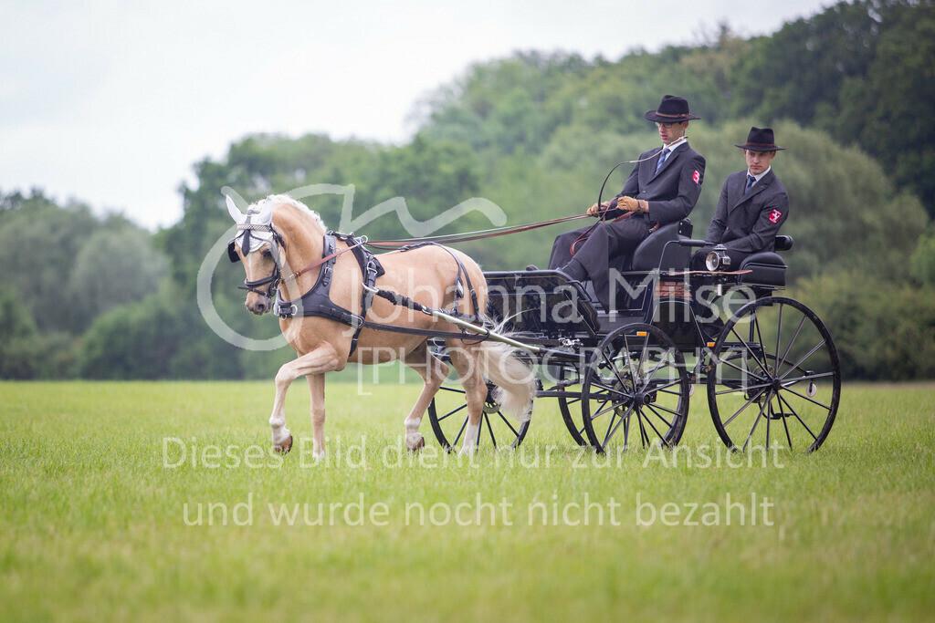 190525_Fahren-010 | Pferdesporttage Herford 2019 Fahren