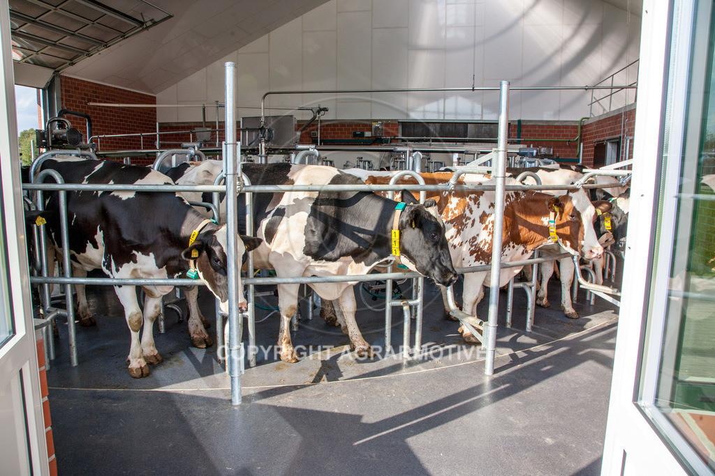 20100821-IMG_0285 | Kühe werden im Melkkarussell gemolken
