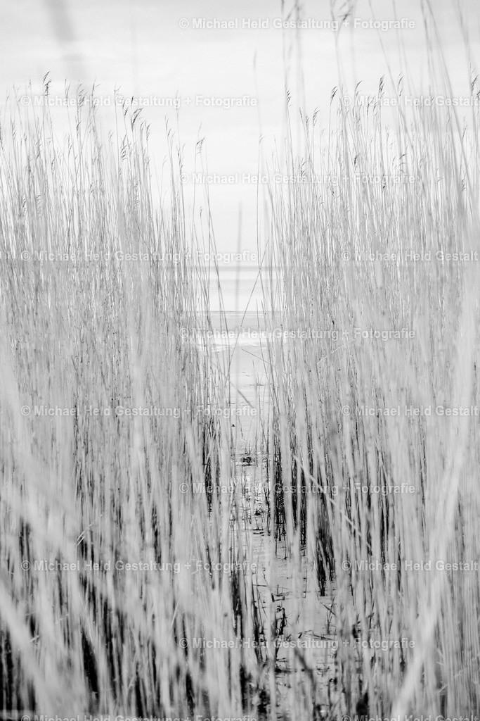 Durchblick   Schilf am Ostseeufer