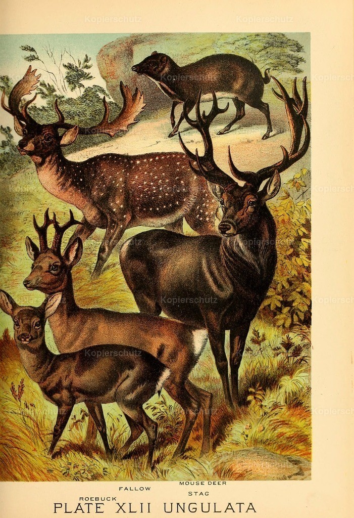 Johnson_s- Household-Book- of-Nature-1880-(43)