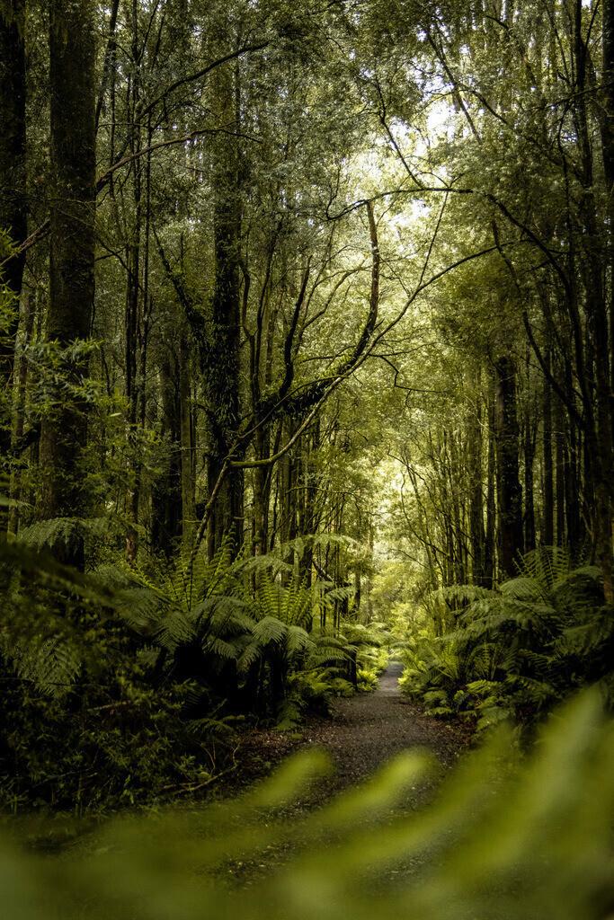 Beech Forest - Victoria