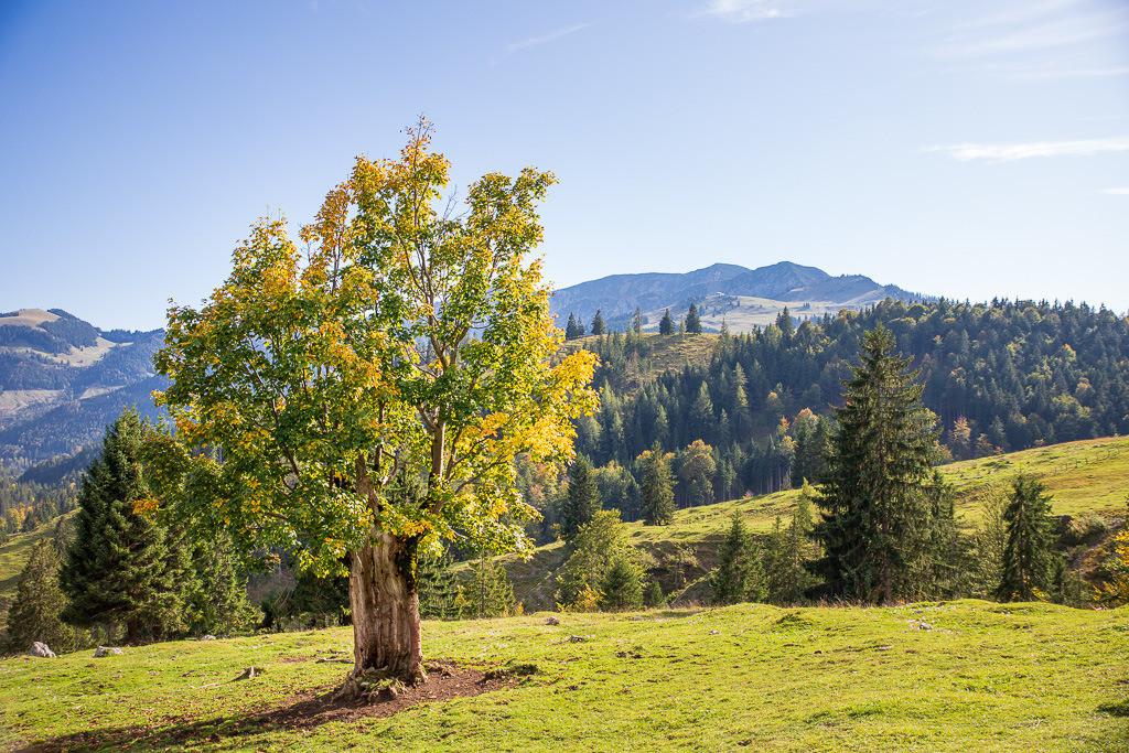 Baum am Sudelfeld, Wildalpjoch