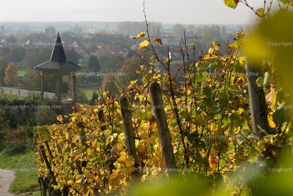 Herbst im Rebmuttergarten | ,, Bild: Thomas Neu