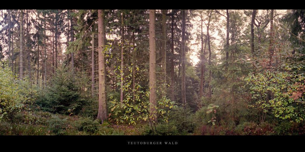 Teutoburger Wald | Nadelwald im Teutoburger Wald