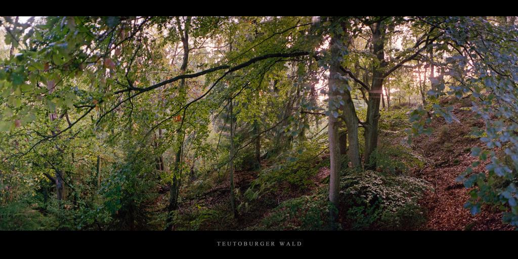 Teutoburger Wald | Buchenwald im Teutoburger Wald