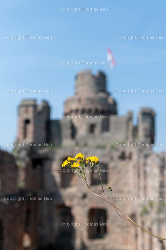 DSC_0092 | Bensheim, Auerbach, Schloss Auerbach, Burg, Mittelalter, Ruine, ,, Bild: Thomas Neu