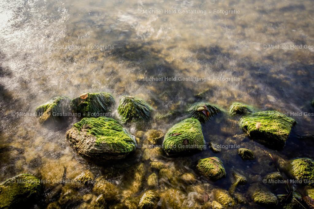 Steine im See | Algenbewachsene Steine im Selenter See