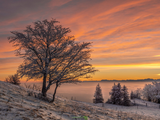 Sonnenaufgang | Frostiger Sonnenaufgang mit wunderschönem, farbigem Himmel