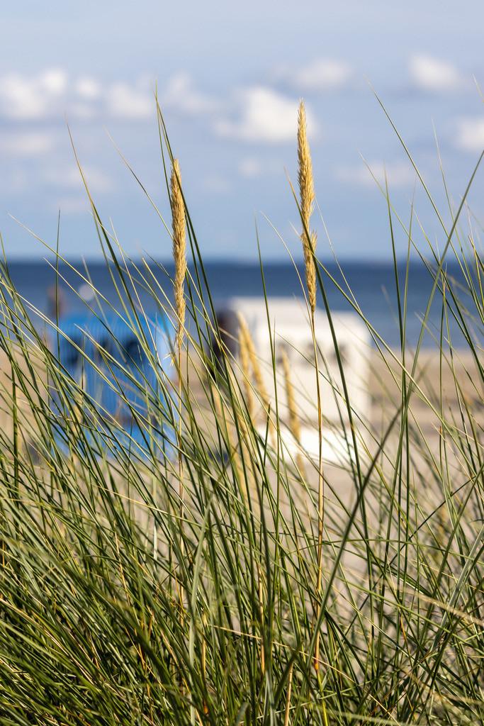 Strand an der Ostsee   Strandhafer und Strandkörbe
