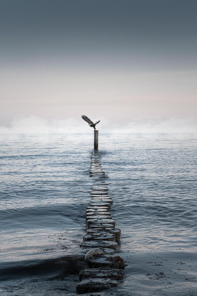 Adler am Meer   Aufgenommen in Kellenhusen (Ostsee) im Jahr 2020