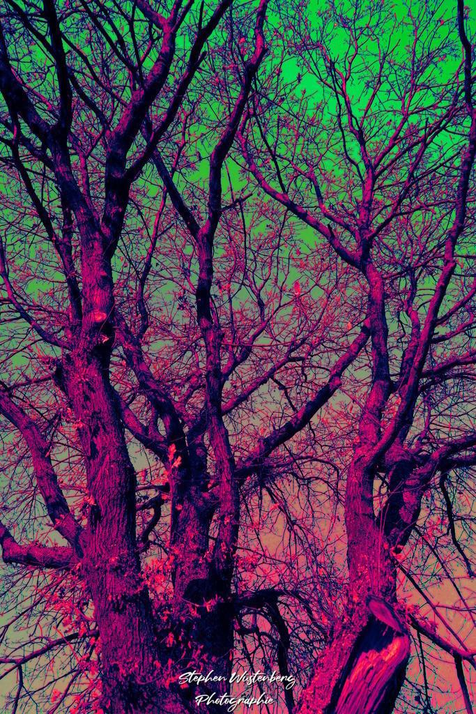 Baumgeäst in psychedelischen Farben 2   Baumgeäst in psychedelischen Farben 2 Bearbeitet mit GIMP