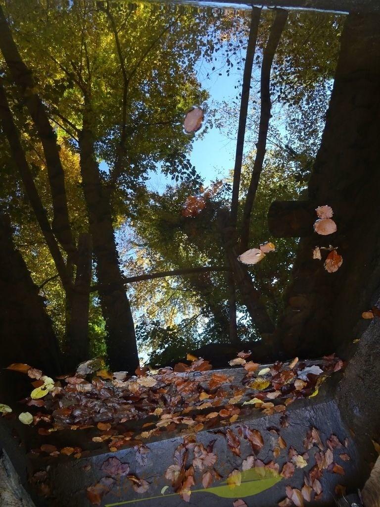 Spiegel des Waldes